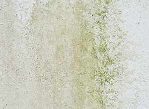 Mould growth on exterior surfaces
